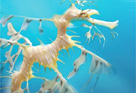 aquarium tree